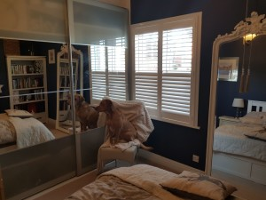 Shutters are the definite way to control light and privacy. this style enables you to operate the top half independently from the bottom half and all within one door